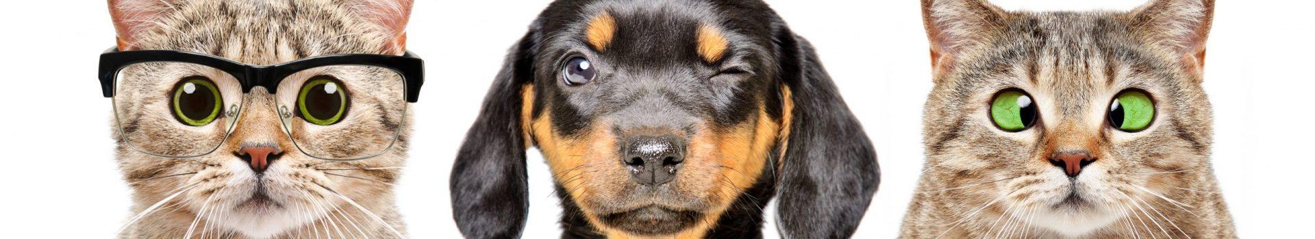 Missoula Veterinary Clinic
